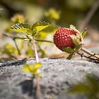 The lonely strawberry by Stwayne