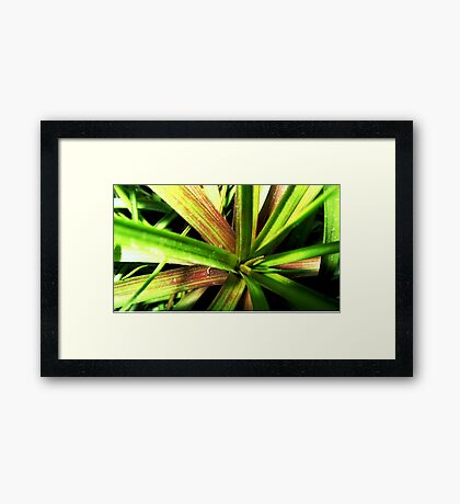 Lost in the jungle Framed Print