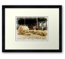 Cows with hay Framed Print