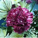 Dusky Pink Carnation by kathrynsgallery