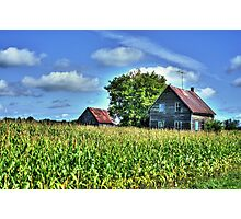 Old Barn in Cornfield Photographic Print
