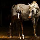 Arabian Mare an Foal by SylanPhotos