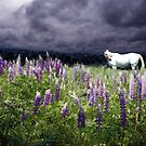 White Horse in a Lupine Dream by Wayne King