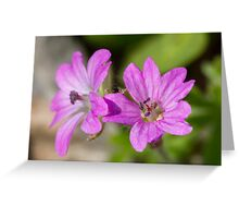 wildflower in the garden Greeting Card
