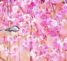 Black Cap Chickadee In Pink Weeping Willow by daphsam