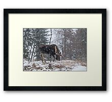 Moose in a snow storm Framed Print