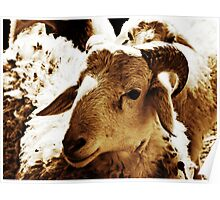 Big Sheep  Poster