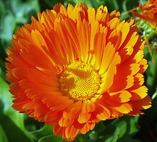 Orange lover's special by ♥⊱ B. Randi Bailey