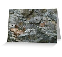 Mountain Goats Greeting Card