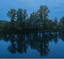 Reflecting Trees by margaret986