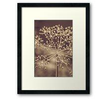 Star Blossom Framed Print
