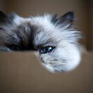 I've got my eye on you by KerrieMcSnap
