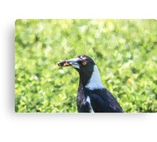Shopping Magpie    (VG2) Canvas Print