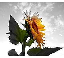 EMERGING COLOR  Photographic Print