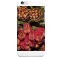 Grevillea polybractea   iPhone Case/Skin
