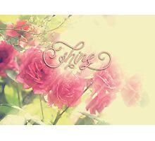 Beautiful Pink English Roses Shine Matte Sunlight Rays Photographic Print