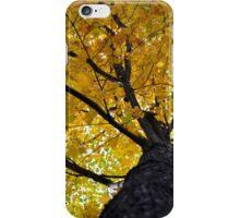 Yellow Maple iPhone Case/Skin