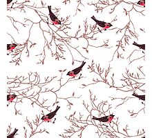 Bullfinches and bare tree branches seamless vector print Photographic Print