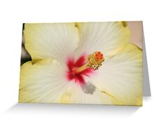 Beautiful Yellow Hibiscus Flower Greeting Card