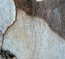 Peeling Bark Of A Eucalyptus Gum Tree Sticker