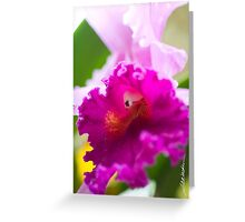 Maui Cattleyas Orchid Greeting Card