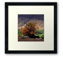 """Canyon Brush"" by Carter L. Shepard Framed Print"