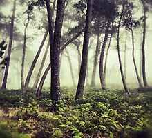 Mystery woodlands by DCarlier