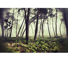 Mystery woodlands Photographic Print