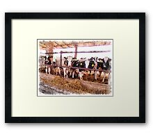 Cows in the barn Framed Print