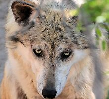Wolf by Kathleen Brant