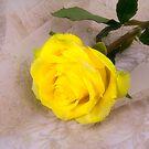 Yellow Antique Rose by daphsam