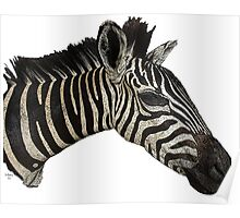 Zip A Dee Do Dah Zebra Poster
