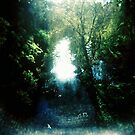 Sunlight on Merri Creek by KerrieMcSnap
