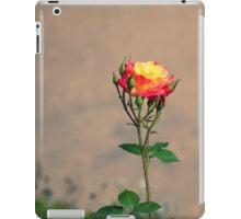 Peach rose iPad Case/Skin