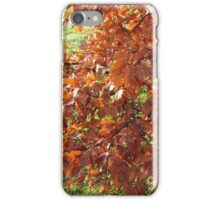 Autumn Leaves and Frosted Field in Essex iPhone Case/Skin