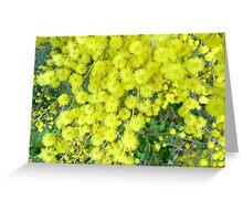 Acacia Dealbata (Silver Wattle) Greeting Card
