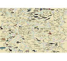 Cartoon Guide to Vertebrate Evolution Photographic Print
