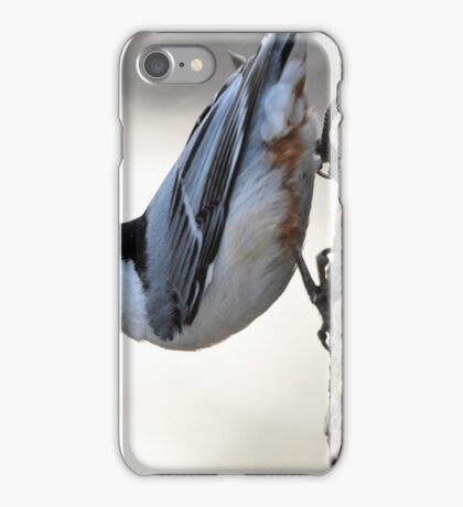 The Nuthatch 2 iPhone Case/Skin