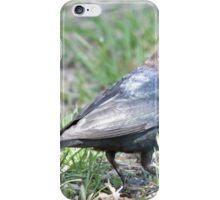 Brown-headed Cowbird 2 iPhone Case/Skin
