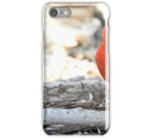 Male Cardinal 2 iPhone Case/Skin