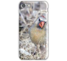 Female Cardinal 3 iPhone Case/Skin