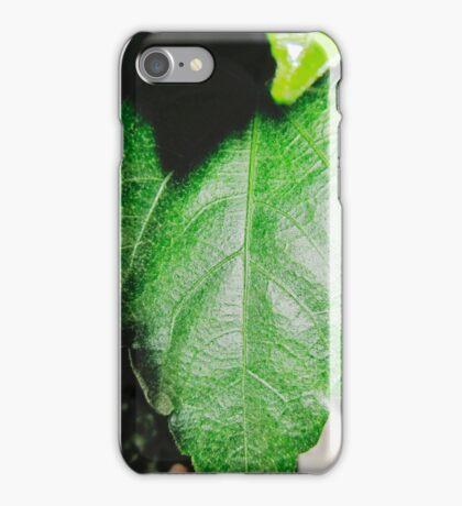 Close-up of a ordinary leaf iPhone Case/Skin