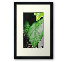 Close-up of a ordinary leaf Framed Print