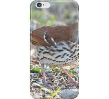 Brown Thrasher iPhone Case/Skin