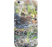 Wood Thrush iPhone Case/Skin