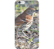 Brown Thrasher 2 iPhone Case/Skin