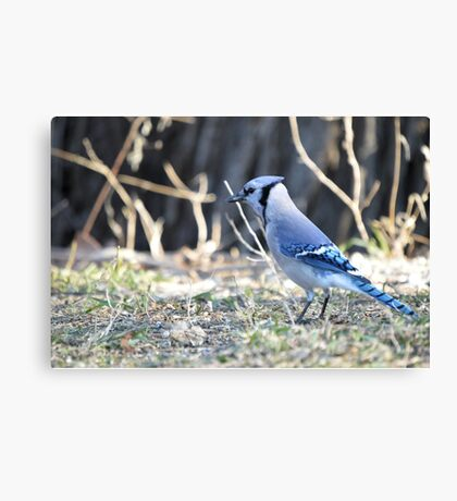 Jay Walkin Canvas Print