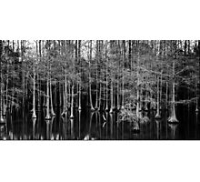 Cypress Grove Photographic Print