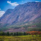 Mulanje Mountain by Tim Cowley