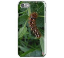Colorful caterpillars iPhone Case/Skin
